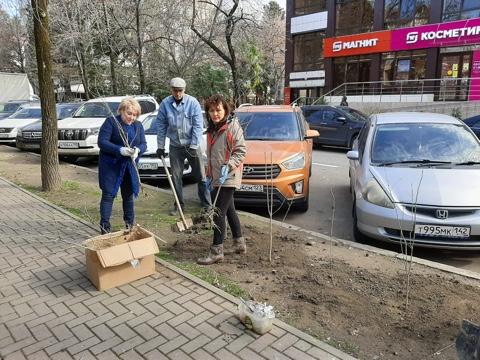 Озеленение центральной улицы Сочи