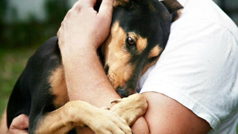Сергей Эксузян поддержал инициативу по информированию населения о гуманном обращении с домашними животными