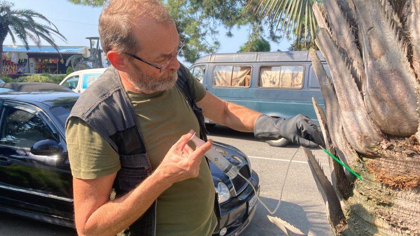 Пальмам в центре Адлера сделали спасительные инъекции